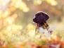 Fotoshooting mit Ines Meier 17.10.2012