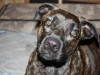 dogs-020-df18469fd069b6814593c85145f6c5ac00d39ae5