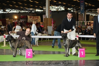 11_07_14_worlddogshow83