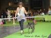 11_07_14_worlddogshow02
