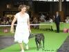 11_07_14_worlddogshow12