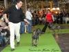 11_07_14_worlddogshow22
