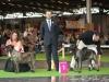 11_07_14_worlddogshow23