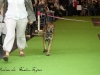 11_07_14_worlddogshow53