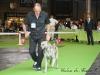 11_07_14_worlddogshow65
