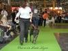 11_07_14_worlddogshow67