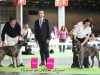 11_07_14_worlddogshow85