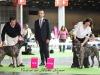 11_07_14_worlddogshow85