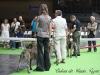 11_07_14_worlddogshow91