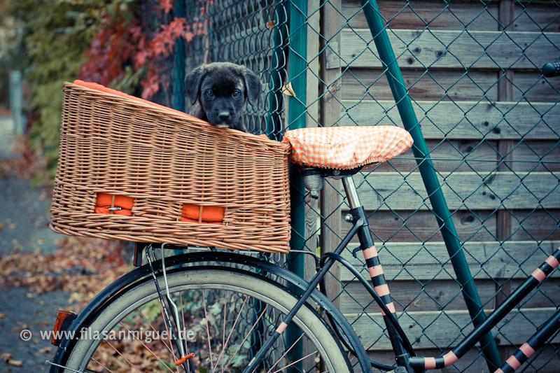 Le Fila et le cyclisme 12_10_15_zim202