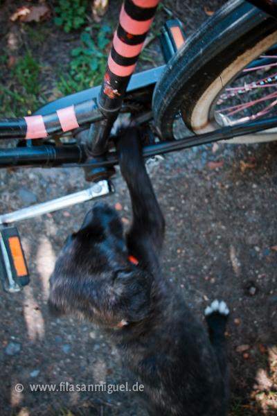 Le Fila et le cyclisme 12_10_19_zim22
